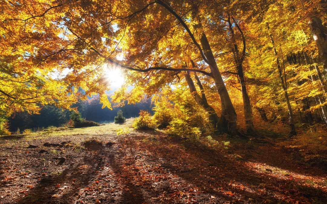 autumn weather and your changing heat pump needs